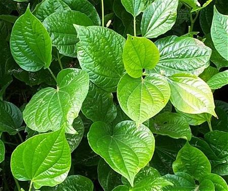 Bài thuốc trị viêm xoang hiệu quả bằng thảo dược quanh nhà