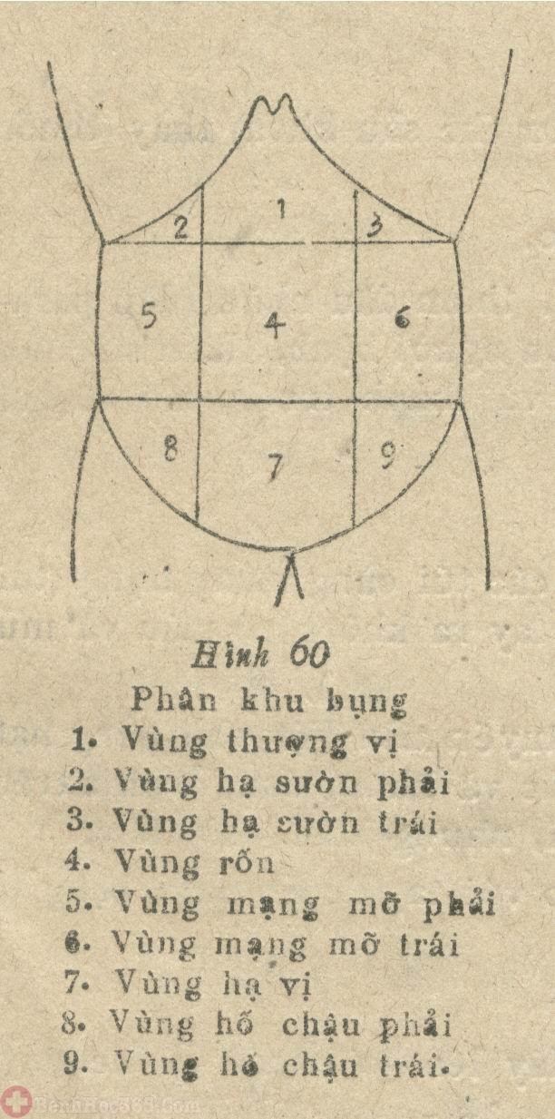 vi-tri-viem-dai-trang-thuong-dau-o-dau-2