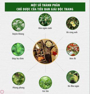 Tiêu ban Giải độc thang bao gồm hơn 30 thảo dược